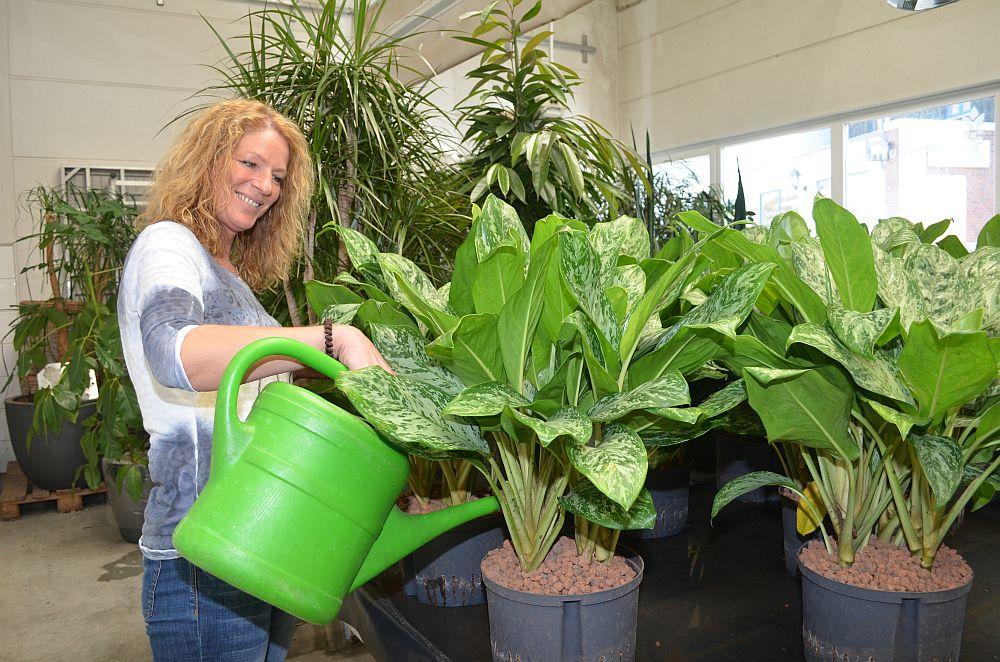 Stefanie Schalle liebt Pflanzen über alles und berät Unternehmen bei der Ausstattung der Büroräume.